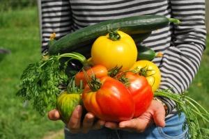 vegetables-742095_1280